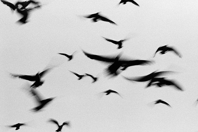 黑白抽象动物摄影 鸟