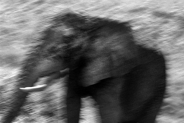 黑白抽象动物摄影 象