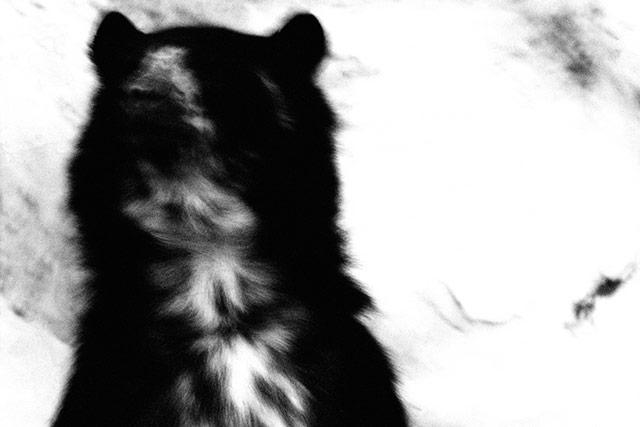 黑白抽象动物摄影 熊