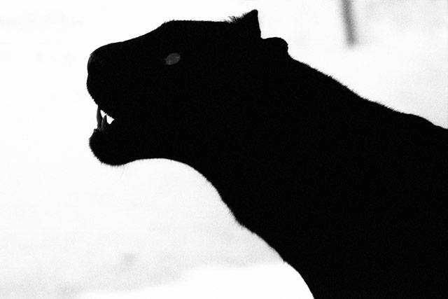 黑白抽象动物摄影