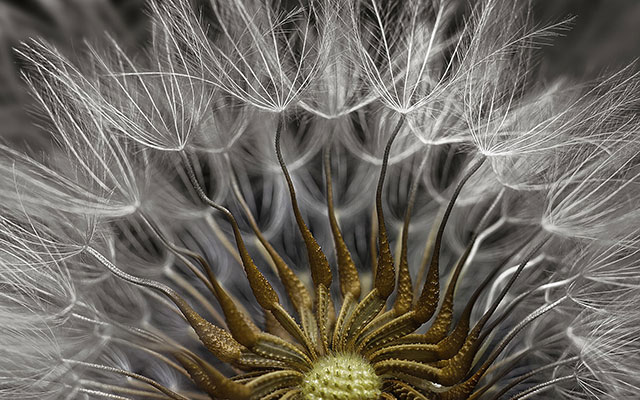 一种植物种子的局部 Photograph: Dr Havi Sarfaty