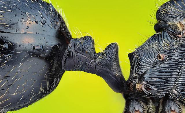 """一只蚂蚁的胸、腹连接桥(多么精巧的""""设计"""") Photograph: Can Tunçer"""